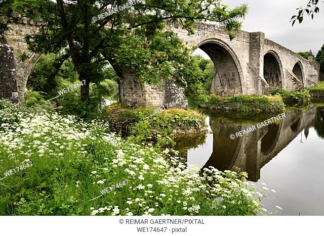 Old Stirling Bridge reflected in the River Forth with medieval stone arches and Queen Annes Lace white flowers on riverbank Stirling Scotland UK