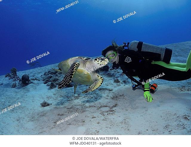 Hawksbill Turtle and Diver, Eretmochelys imbricata, Cozumel, Caribbean Sea, Mexico