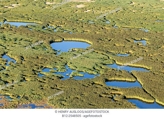 France, Camargue, Gard department, Pond of Charnier