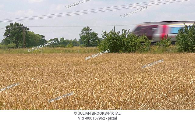Virgin Express train passing a field of ripe wheat