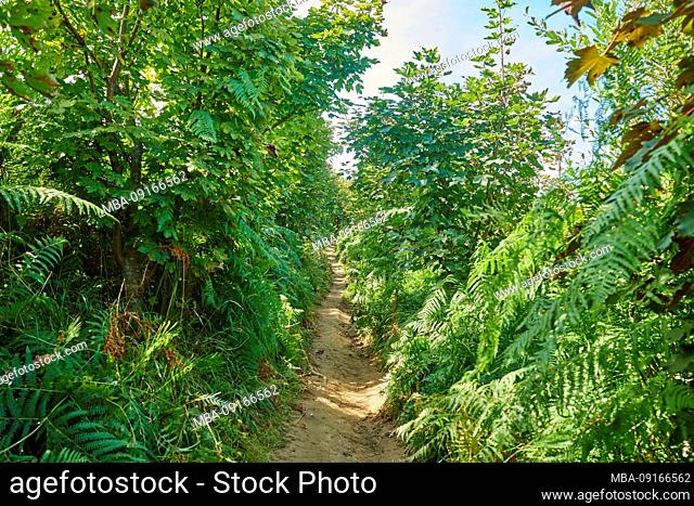 Landscape, footpath, Way of St. James, through the forest between Pasaia and Donostia San Sebastian, Basque Country, Spain
