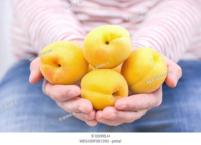 Woman's hands holding flat apricots