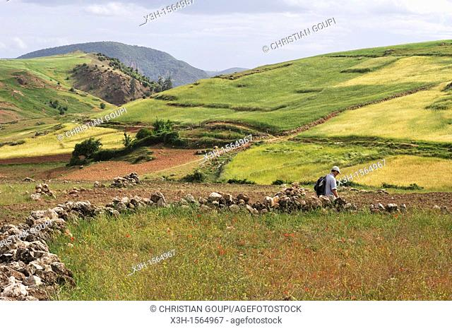 hikers in countryside around Ain Leuh, Khenifra region, Middle Atlas, Morocco, North Africa