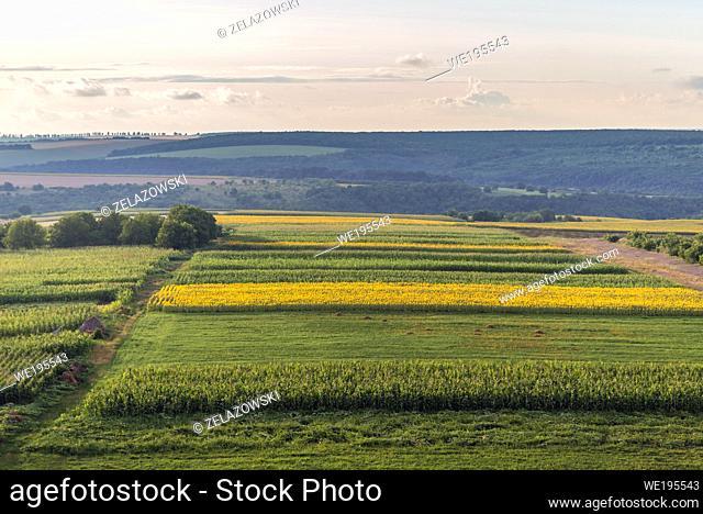 Corn and sunflower fields in Saharna Noua village, Rezina District of Moldova