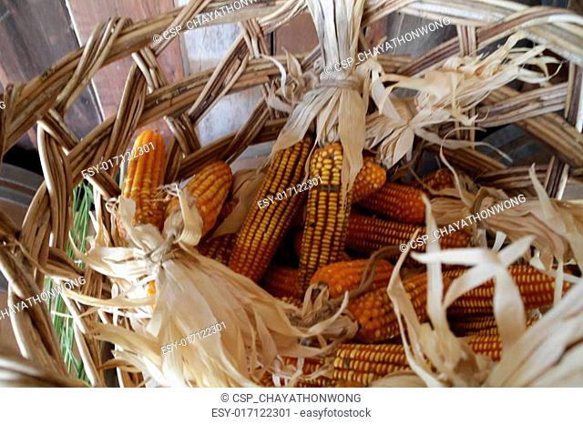 dry corn in the tank wood background