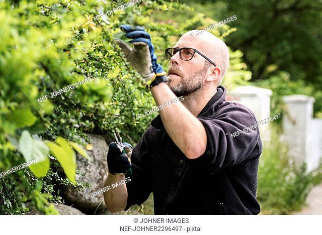 Man cutting plants in garden