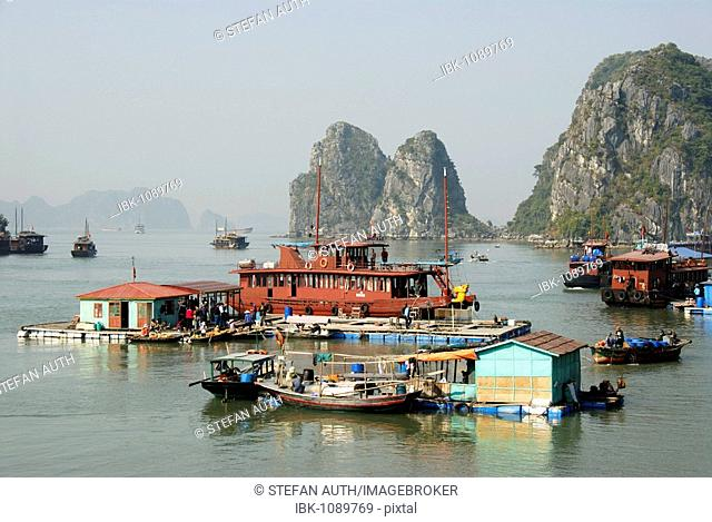 Floating village with houseboats in front of a rocky island, Ha Long Bay, Vietnam, Asia