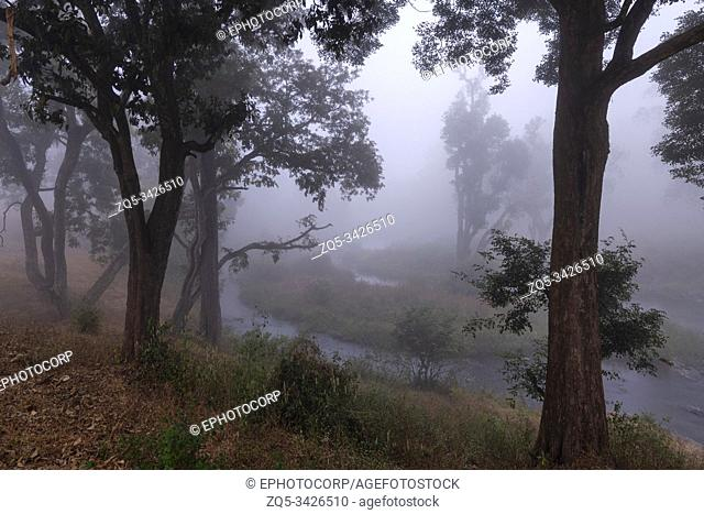 Misty Morning at Mudumalai Tiger Reserve, Tamilnadu, India