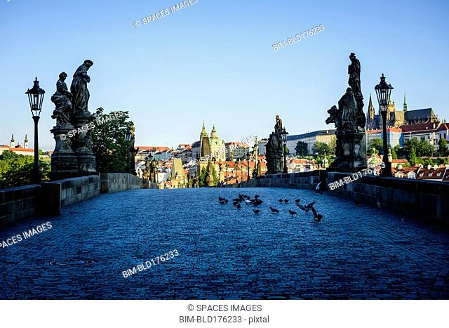 Pigeons on brick path in Prague cityscape, Czech Republic