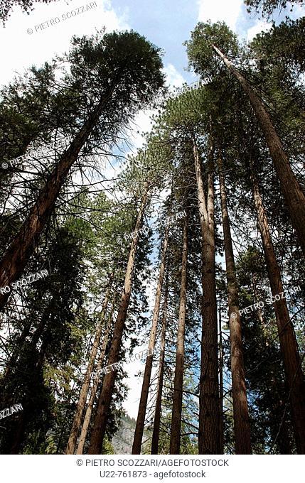 Yosemite National Park California, trees