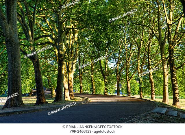 Curved tree-lined avenue at Chateau Chambord, Loire-et-Cher, Centre, France