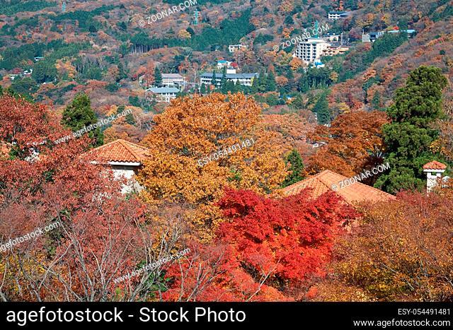 The picturesque autumn foliage on the mountain slopes at Hakone. Kanagawa. Japan
