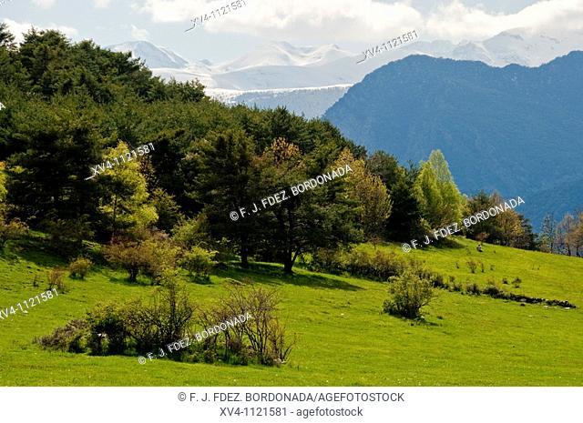 Viros forest  Pallars Sobira  Lleida  Catalonia  Spain