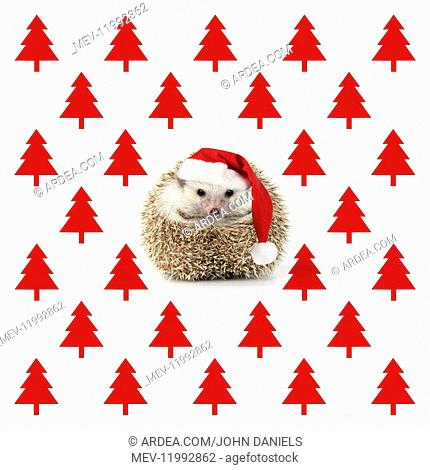 Hedgehog wearing Christmas hat with Christmas tree background