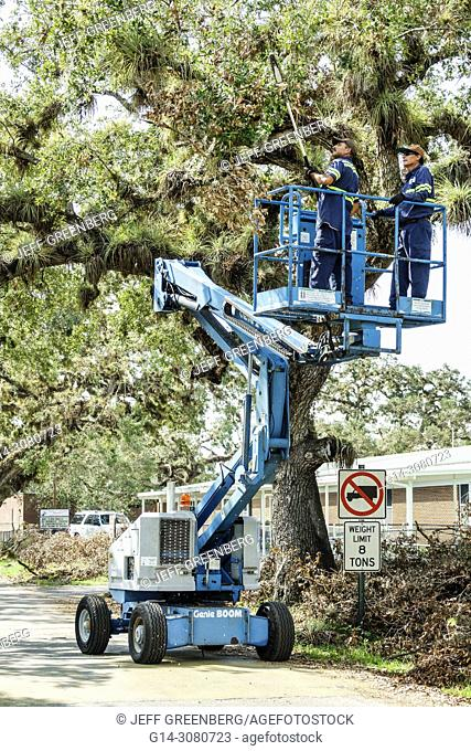 Florida, LaBelle, after Hurricane Irma, damage destruction aftermath, disaster recovery relief, cleanup recovery, live oak tree, Hispanic, man, Genie Boom Lift