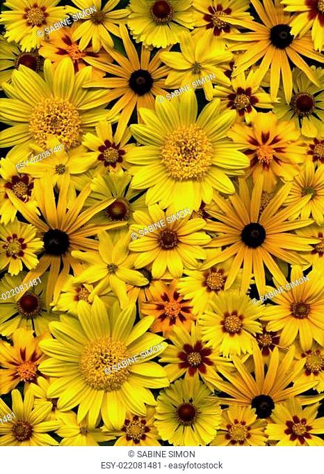 Hintergrund mit Blüten in bunter Vielfalt