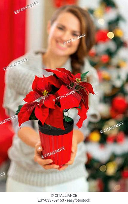 Closeup on Christmas rose in hand of happy woman