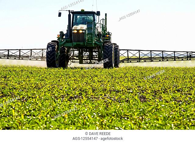 A high clearance sprayer gives a ground chemical application of herbicide to early growth feed/grain corn, near Steinbach; Manitoba, Canada