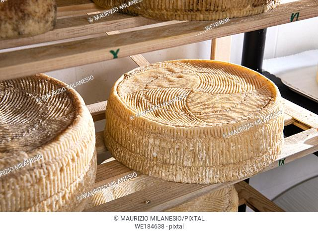 Forms of aged cheese on the shelf for maturing
