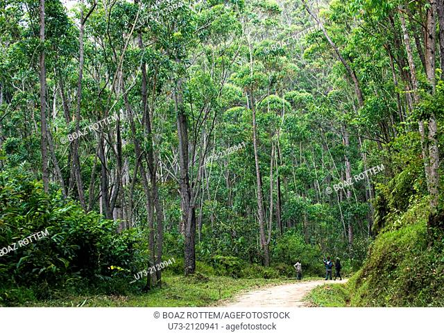 Villagers walking on a path in the Andasibe forest area in Eastern Madagascar