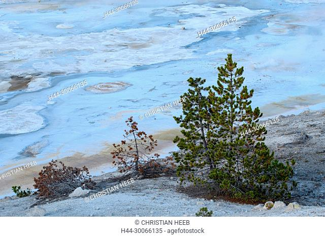 North America, American, USA, Rocky Mountains, West, Yellowstone National Park, UNESCO, World Heritage, Norris Geyser Basin