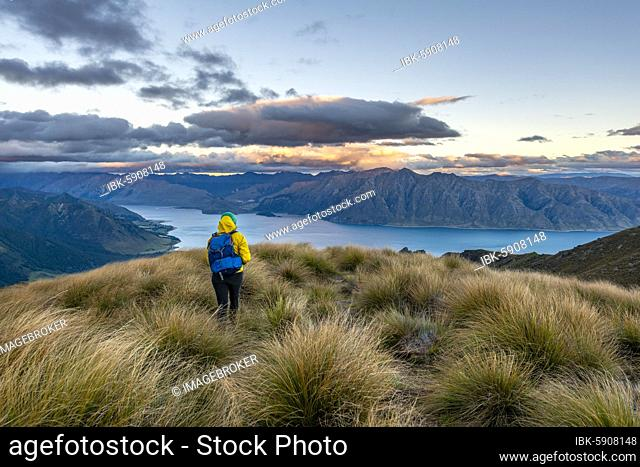 Hiker looks into the distance, view of Lake Hawea at sunset, lake and mountain landscape, view from Isthmus Peak, Wanaka, Otago, South Island, New Zealand