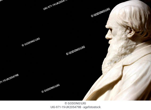 Statue of Darwin in the Natural History Museum, London, London, Great Britain