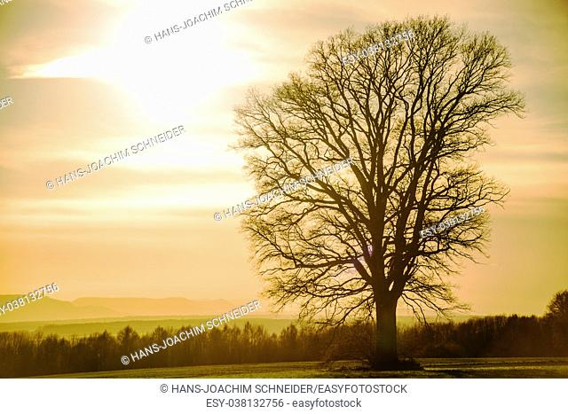 sunset in autumn with tree in Germany