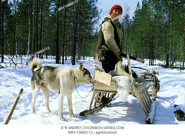 Selkup hunter, North Siberia, Russia (Northern minority). Hunter next to sledge, husky dog; prior to reindeer harnessing, near river Taz, spring