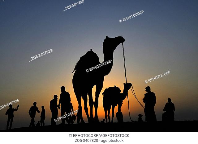 Camel rides in silhouette, SAM dunes at Jaisalmer in Rajasthan, India