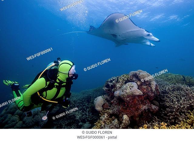 Oceania, Micronesia, Yap, Diver with reef manta ray, Manta alfredi