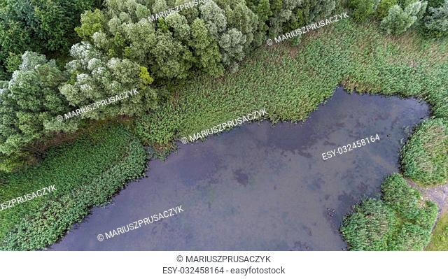 Summer landscape. Green trees at riverbank in Poland