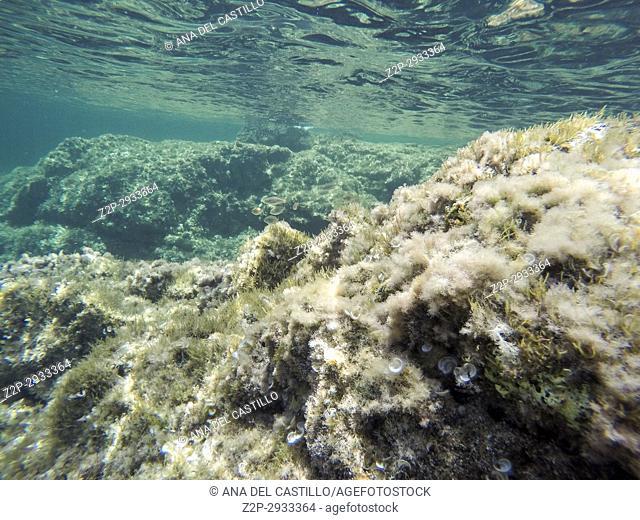 Turquoise water in Minorca island Balearics Spain Underwater image Sa Mesquida coast