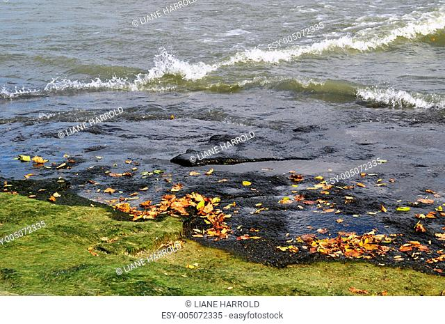 Algae leaves and water