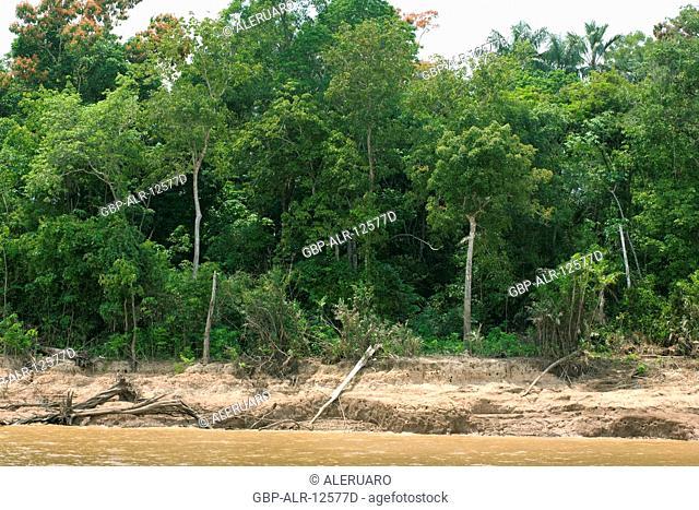 Forest, Amazônia, Manaus, Amazonas, Brazil