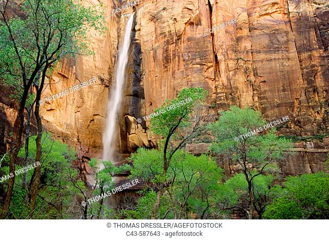 The Temple of Sinawava is a red Navajo sandstone cliff in the Zion Canyon, towering above the Virgin River and Freemont cottonwood (Populus fremontii) trees