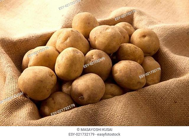 Potatoes harvested