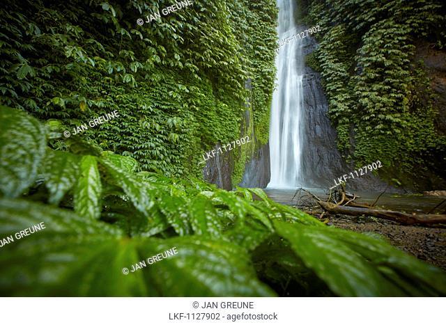 MUNUK waterfall, near Gobleg, north Bali, Indonesia