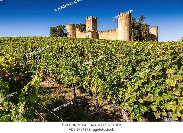 Vineyard and ancient castle. Sauternes Region, Budos, Aquitaine-Limousin-Poitou-Charentes. Bordeaux, Aquitaine France Europe
