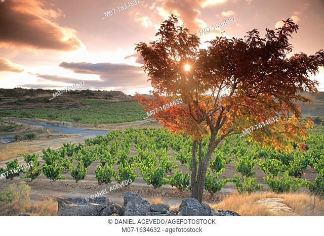 Autumn scape Rioja, Spain