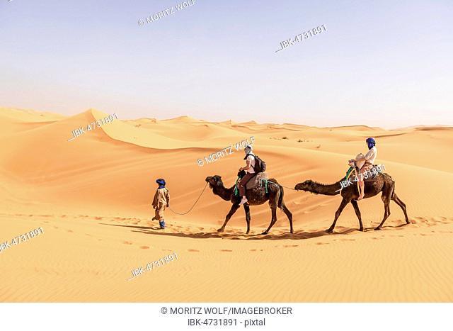 Caravan with two dromedaries (Camelus dromedarius) in sand dunes, desert Erg Chebbi, Merzouga, Sahara, Morocco