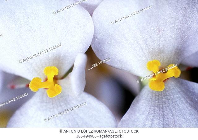 Flower stamens