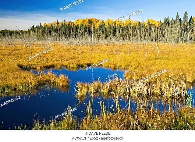 Bog, Prince Albert National Park, Saskatchewan, Canada