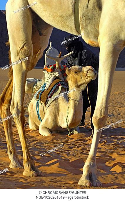 Tuareg nomads and dromedaries at a campsite in the desert, Acacus Mountains, Sahara desert, Libya