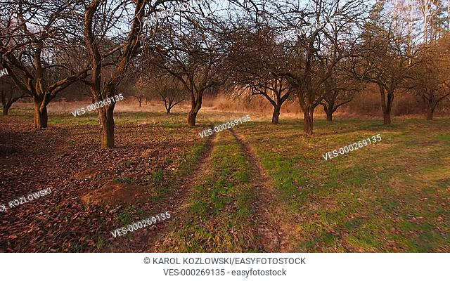 Walking through the Old Orchard near Lublin, Lubelszczyzna, Poland