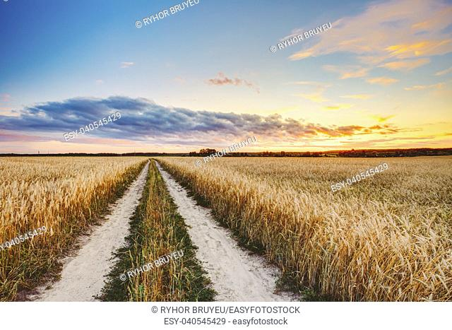 Rural Countryside Road Through Wheat Field. Yellow Barley Field In Summer. Agricultural Season, Harvest Time. Colorful Dramatic Sky At Sunset Sunrise
