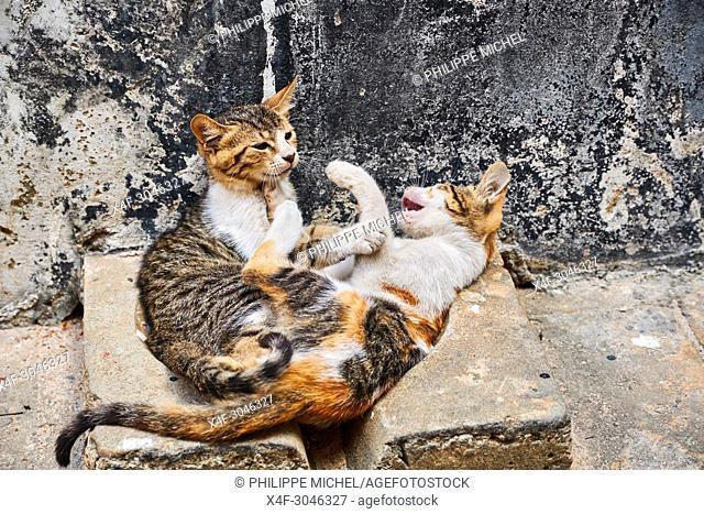 Tanzania, Zanzibar island, Unguja, Stone Town, unesco world heritage, street cats