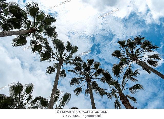 Palm trees. Valencia. Spain