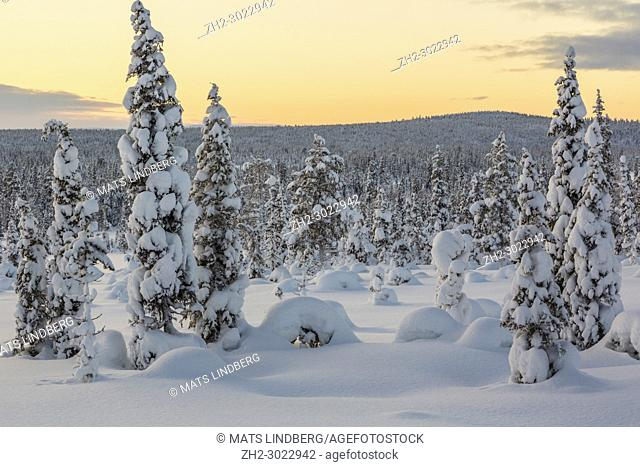 Sunset over winter landscape with snowy trees and mountain in background, gällivare county, swedish Lapland, Sweden