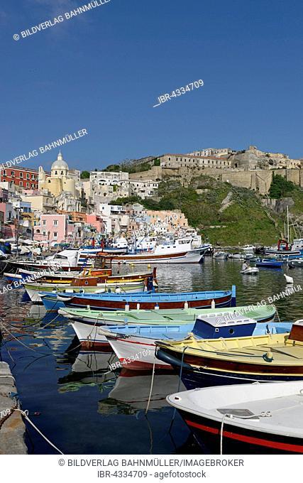 Fishing boats in the harbor, Marina di Corricella, Procida Island, Phlegraean Islands, Gulf of Naples, Campania, Italy